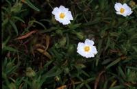 Photographie n°bb001364 du taxon