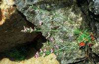 Photographie n°bb002474 du taxon