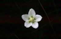 Photographie n°bb002810 du taxon