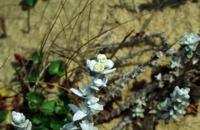 Photographie n°bb002935 du taxon