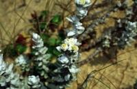 Photographie n°bb002936 du taxon