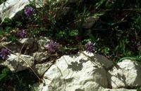 Photographie n°bb003046 du taxon