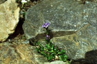 Photographie n°bb007432 du taxon