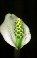 Photographie n°bb009090 du taxon