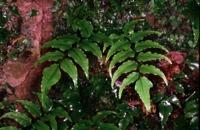 Photographie n°bb010875 du taxon