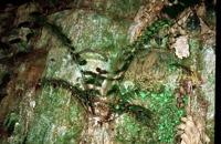 Photographie n°bb010877 du taxon