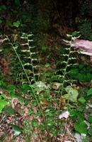 Photographie n°bb010878 du taxon