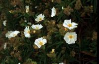 Photographie n°bb011045 du taxon