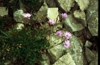 Photographie n°bb011092 du taxon