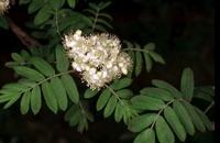 Photographie n°bb011362 du taxon