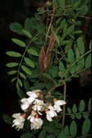 Photographie n°bb011681 du taxon