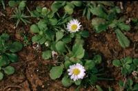 Photographie n°bb012658 du taxon