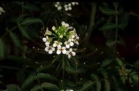 Photographie n°bb013528 du taxon