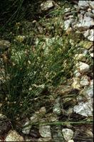 Photographie n°bb013713 du taxon