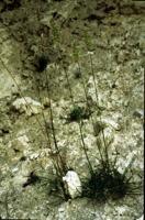 Photographie n°bb013737 du taxon