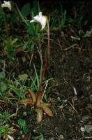Photographie n°bb013794 du taxon