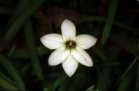 Photographie n°bb014787 du taxon