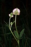 Photographie n°bb015260 du taxon