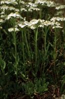 Photographie n°bb015563 du taxon
