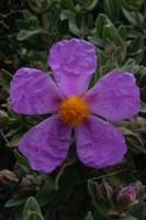 Photographie n°bb016208 du taxon