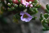 Photographie n°bb016275 du taxon