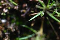 Photographie n°bb016548 du taxon