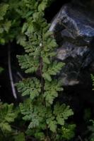 Photographie n°bb016592 du taxon