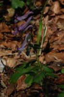Photographie n°bb016604 du taxon