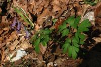 Photographie n°bb016605 du taxon