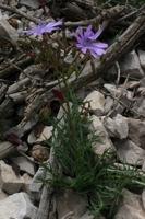 Photographie n°bb016730 du taxon