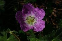 Photographie n°bb017828 du taxon
