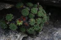 Photographie n°bb018008 du taxon