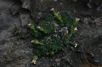 Photographie n°bb018009 du taxon