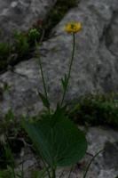 Photographie n°bb018076 du taxon