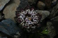 Photographie n°bb018308 du taxon