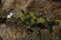 Photographie n°bb018743 du taxon