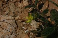 Photographie n°bb019488 du taxon