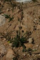 Photographie n°bb019489 du taxon