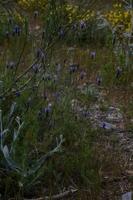 Photographie n°bb019652 du taxon