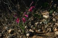 Photographie n°bb019731 du taxon