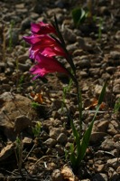 Photographie n°bb019732 du taxon
