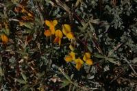 Photographie n°bb019750 du taxon