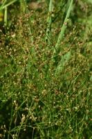 Photographie n°bb020659 du taxon