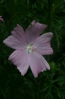 Photographie n°bb020701 du taxon