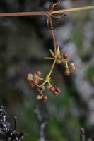 Photographie n°bb021447 du taxon