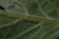 Photographie n°bb021637 du taxon