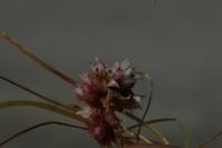 Photographie n°bb022025 du taxon