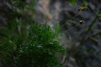 Photographie n°bb022284 du taxon