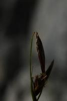Photographie n°bb022488 du taxon