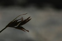 Photographie n°bb022491 du taxon